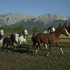 La Grande Virée des Lodges et des Ranchs (Occupation simple ou double)