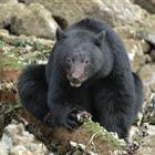 Observation des ours en zodiac - Tofino